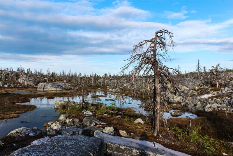 las nie żyje zdjęcie stock