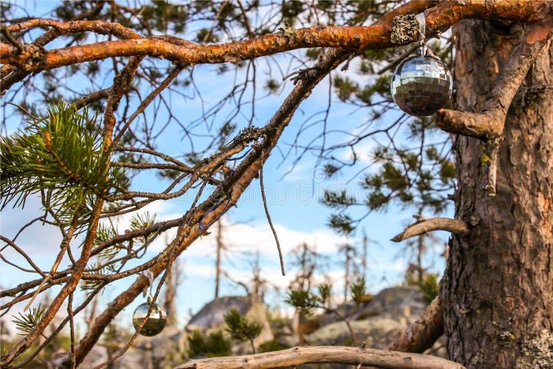 las nie żyje zdjęcia stock