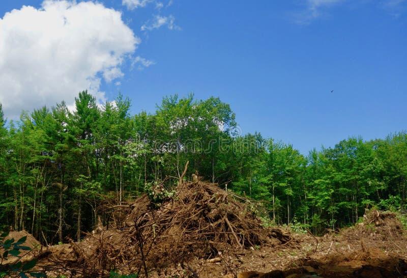 Las niszczący dla rozwoju wielkomiejskiego fotografia stock