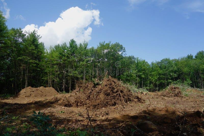 Las niszczący dla rozwoju wielkomiejskiego zdjęcie royalty free