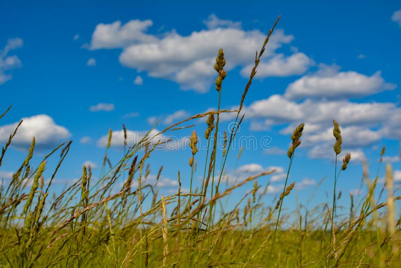 Las nubes blancas flotan sobre campos verdes foto de archivo