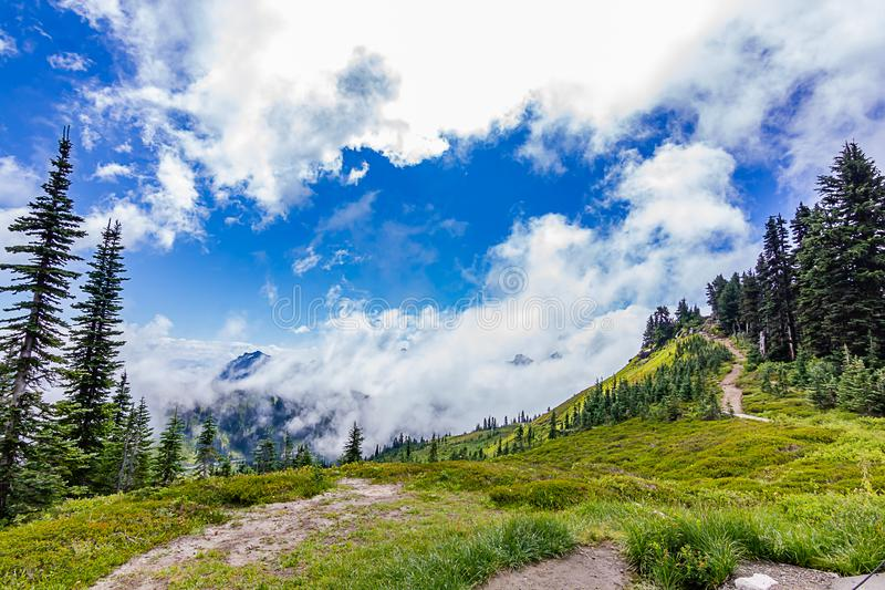 las nubes brillantes flotan sobre árboles y prado alpino en Washington imágenes de archivo libres de regalías