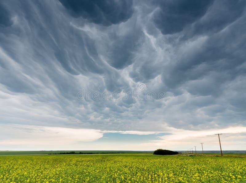 Las nubes de tormenta oscuras y siniestras del mammatus sobre un canola colocan foto de archivo libre de regalías