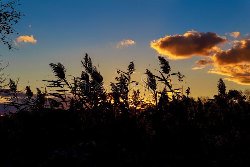 Las nubes manchadas anaranjadas extensas forman el cuenco en cielo de la puesta del sol del otoño adentro semi imagen de archivo libre de regalías