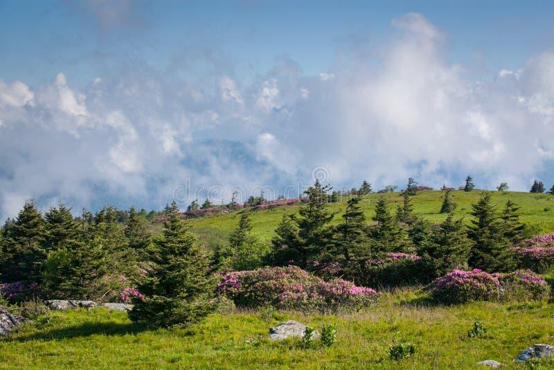 Montañas meladas meridionales calvas de las montañas apalaches de la montaña herbosa fotografía de archivo