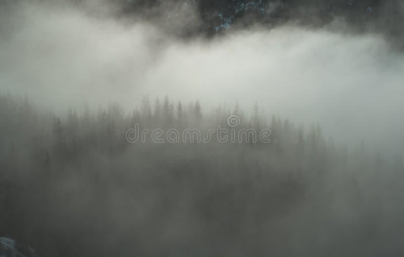 Las nubes suaves cuelgan bajo sobre bosques siempre verdes imagenes de archivo
