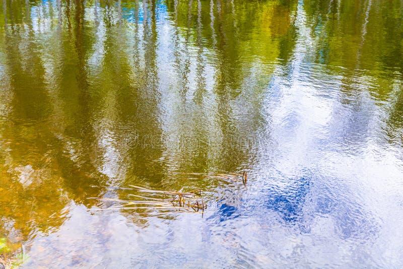 Las nubes y el bosque se reflejan en el lago el agua es verde imagen de archivo