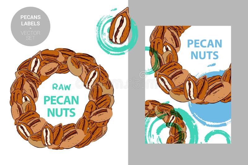 Las nueces de pacana crudas etiquetan Insignia colorida creativa con el semic?rculo de nueces Círculo de las pacanas exhaustas de ilustración del vector