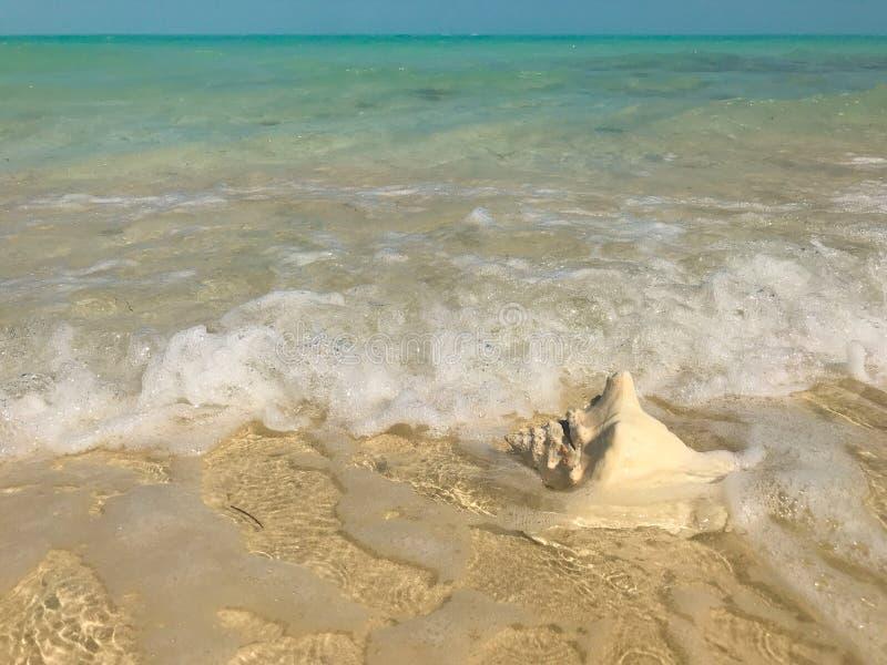 Las ondas se lavan para arriba en una cáscara de la concha en turcos y Caicos foto de archivo