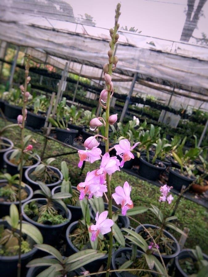 Las orquídeas imágenes de archivo libres de regalías