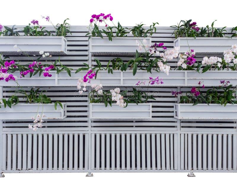 Las orquídeas del rosa y blancas adornan en la bandeja de madera, colgando en las paredes superficiales de madera blancas fotografía de archivo