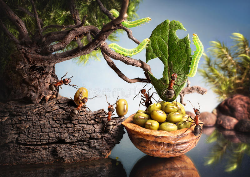 Las orugas comen la vela de la corteza de las hormigas imagen de archivo libre de regalías