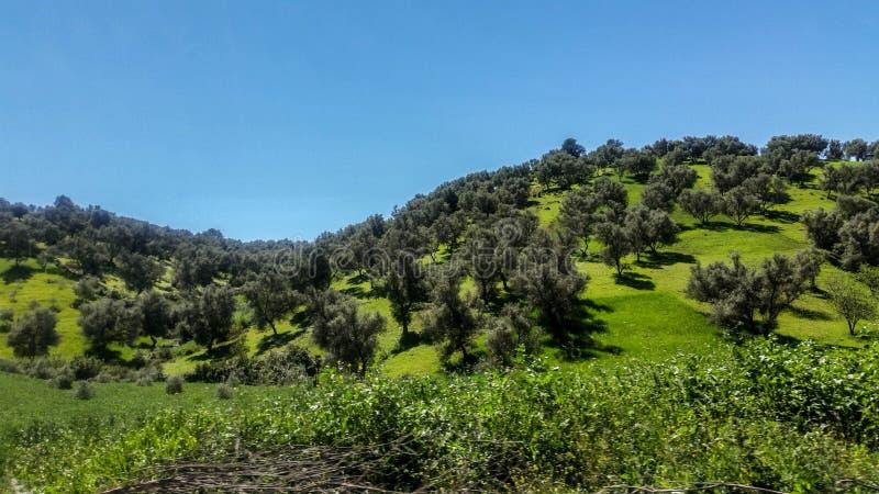 Las północny Morocco zdjęcie stock