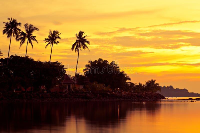 Las palmas de coco en la arena varan en trópico en puesta del sol imagen de archivo libre de regalías