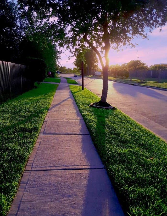 las palmas de la puesta del sol azucaran el paseo de Texas Houston de la tierra foto de archivo libre de regalías