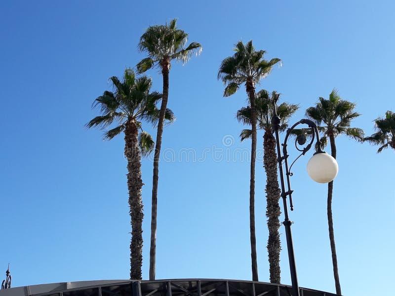 Las palmeras con soplaron las vacaciones de Larnaca Chipre del fondo del cielo foto de archivo libre de regalías