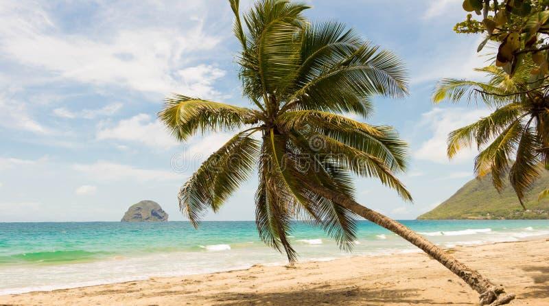 Las palmeras en la playa del Caribe, isla de Martinica foto de archivo libre de regalías