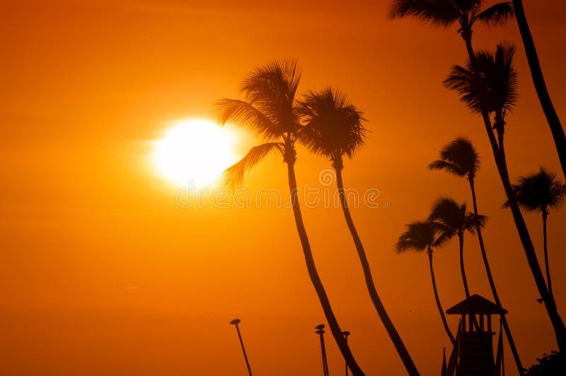Las palmeras siluetean en la playa tropical de la puesta del sol Puesta del sol anaranjada imágenes de archivo libres de regalías