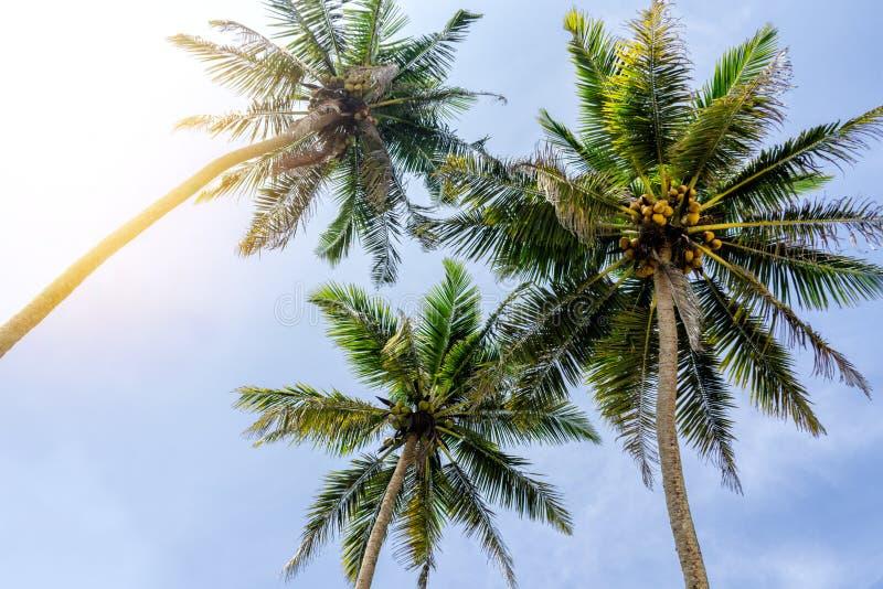 Las palmeras ven de debajo, día soleado en las zonas tropicales fotografía de archivo libre de regalías