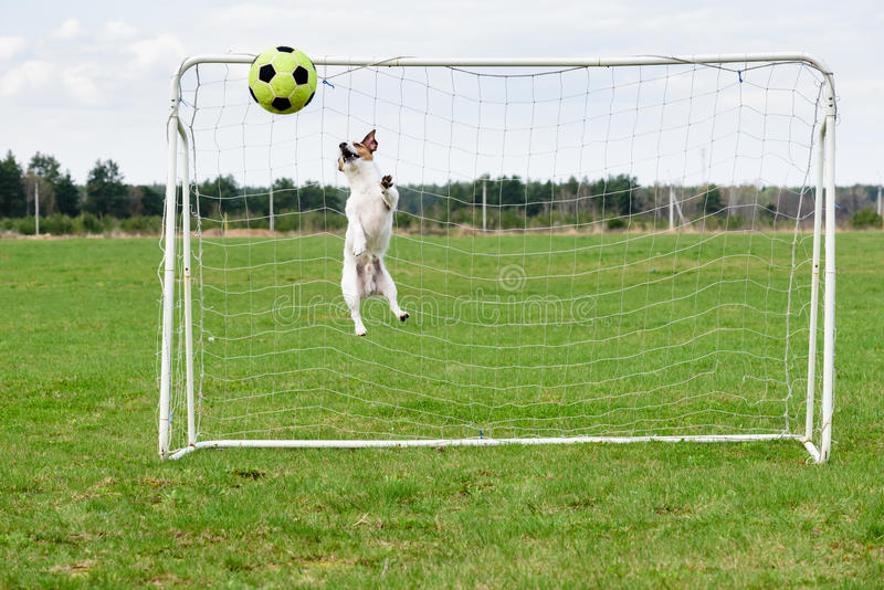 Las paradas divertidas del encargado del fútbol golpean con el pie en meta en el salto de altura imágenes de archivo libres de regalías