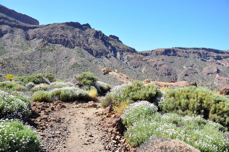 Las pasmo Canadas Del Teide fotografia stock