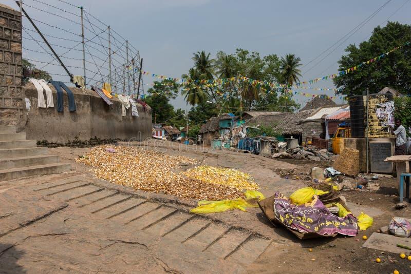 Las peladuras de fruta de la fruta cítrica se secan en la tierra en Dindigul imágenes de archivo libres de regalías