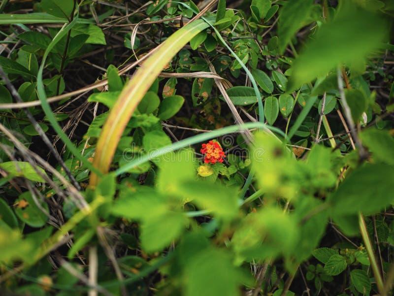 Las pequeñas flores crecen en el centro del bosque foto de archivo