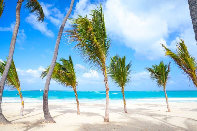Las pequeñas palmeras crecen en la playa arenosa vacía imagen de archivo libre de regalías