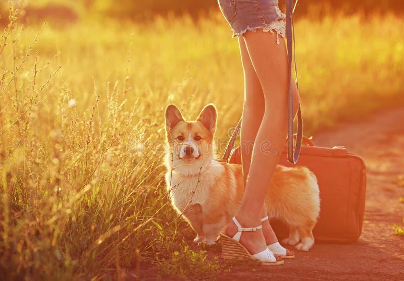 Las piernas largas de la muchacha y un perrito pelirrojo lindo del corgi con una maleta vieja están en el campo del camino y para fotos de archivo