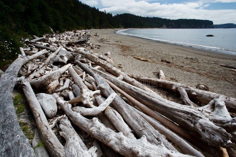 Las pilas de árboles muertos del driftwood dejan en desorden la playa imagen de archivo libre de regalías