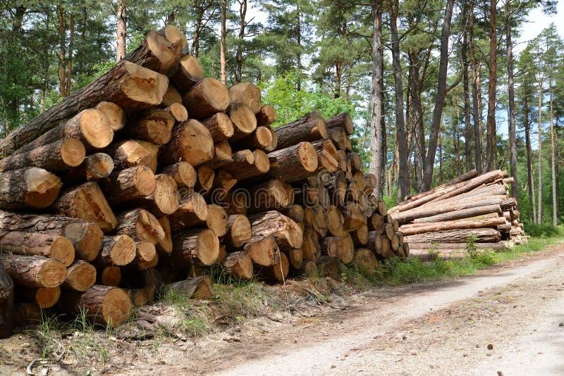Las pilas de registros del pino mienten en el camino forestal registración imágenes de archivo libres de regalías