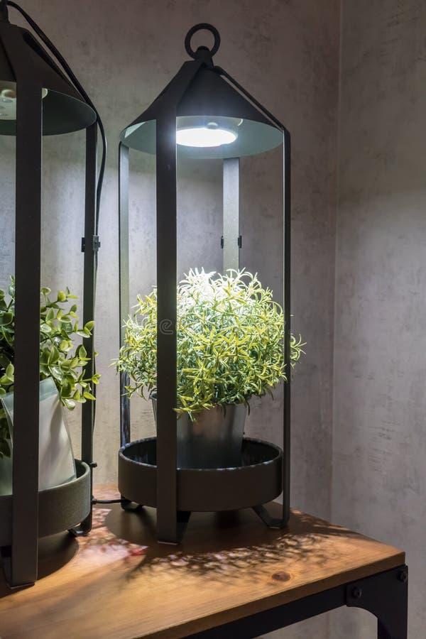Las plantas artificiales verdes en blanco del metal pintaron el cubo debajo de la lámpara fotos de archivo