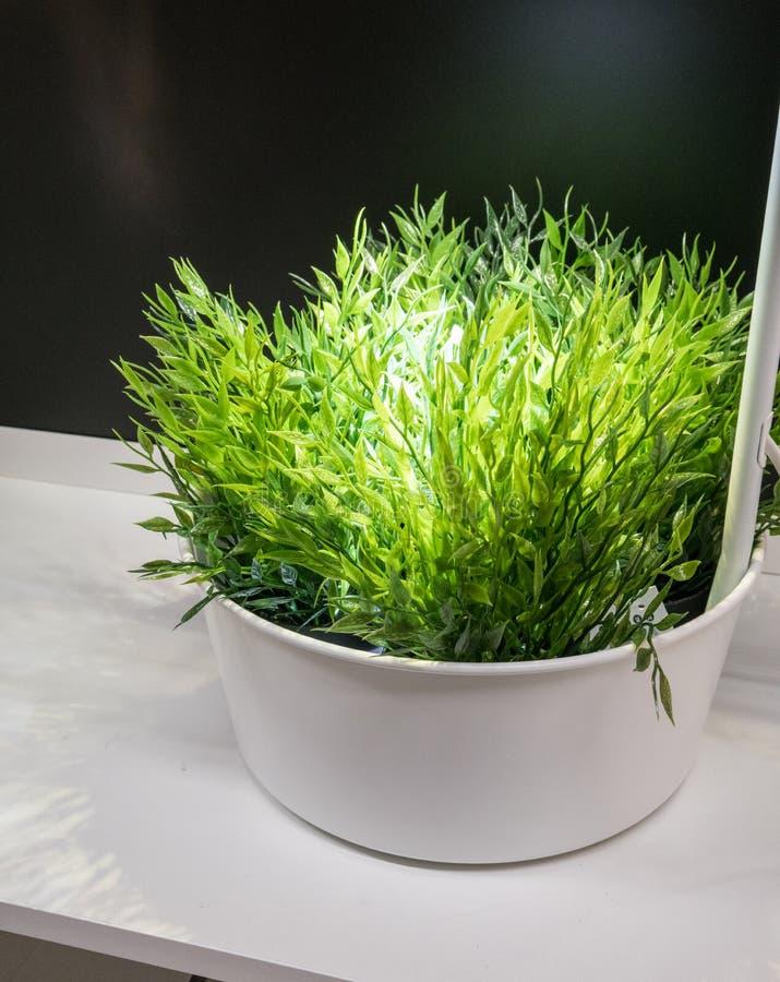 Las plantas artificiales verdes en blanco del metal pintaron el cubo debajo de la lámpara foto de archivo