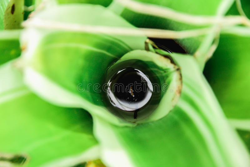 Las plantas ornamentales son coloridas imagenes de archivo