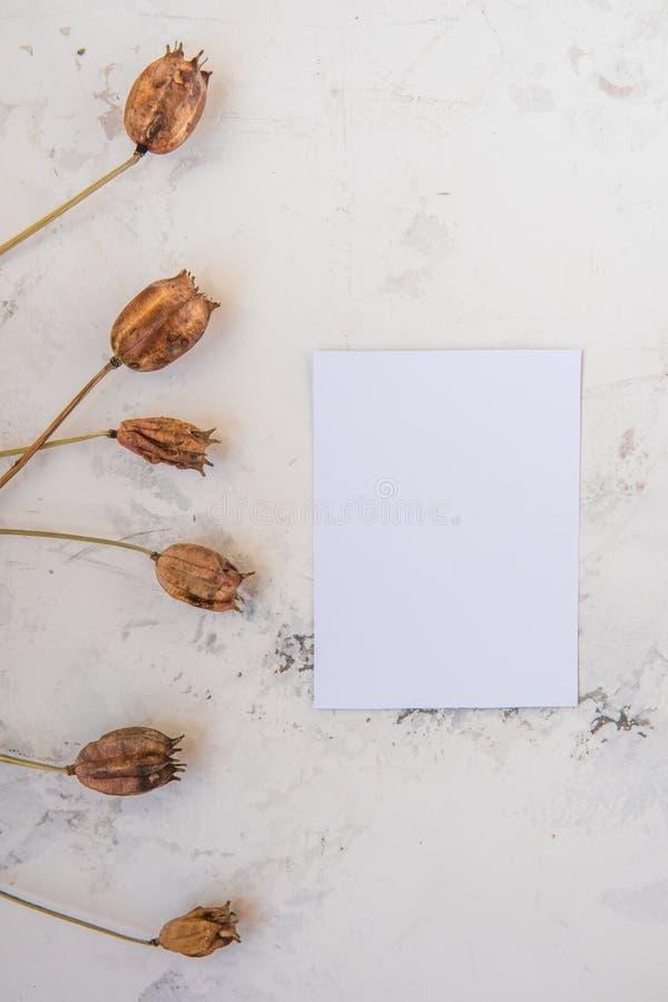 Las plantas secas en un blanco texturizaron el fondo con el papel vacío para y imagenes de archivo