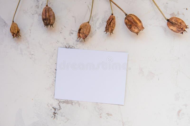 Las plantas secas en un blanco texturizaron el fondo con el papel vacío para y foto de archivo libre de regalías