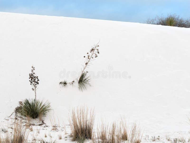 Las plantas toman la raíz en las arenas blancas fotos de archivo libres de regalías