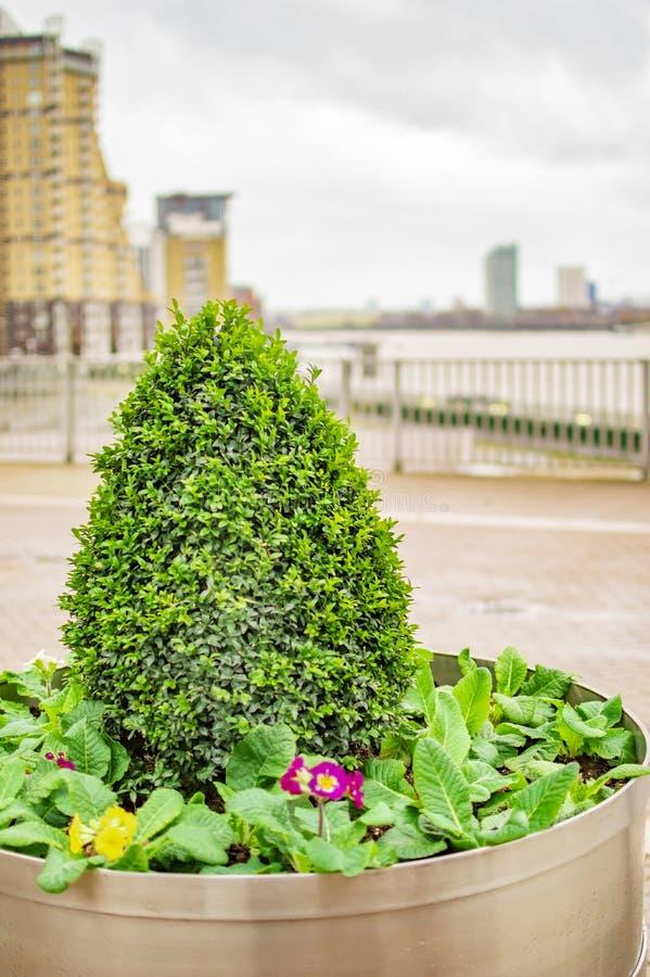 Las plantas verdes en el muelle amarillo Londres se ha diseñado que fotos de archivo libres de regalías