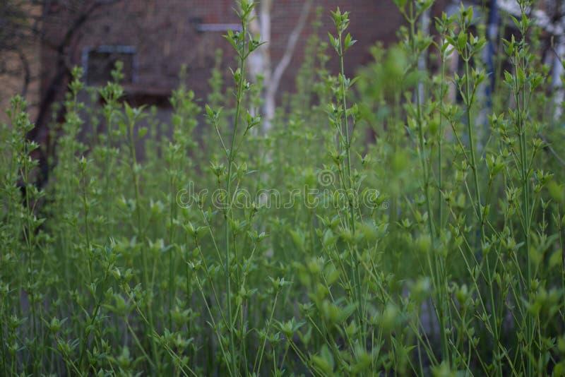 Las plantas verdes enrarecen el crecimiento derecho imagen de archivo libre de regalías
