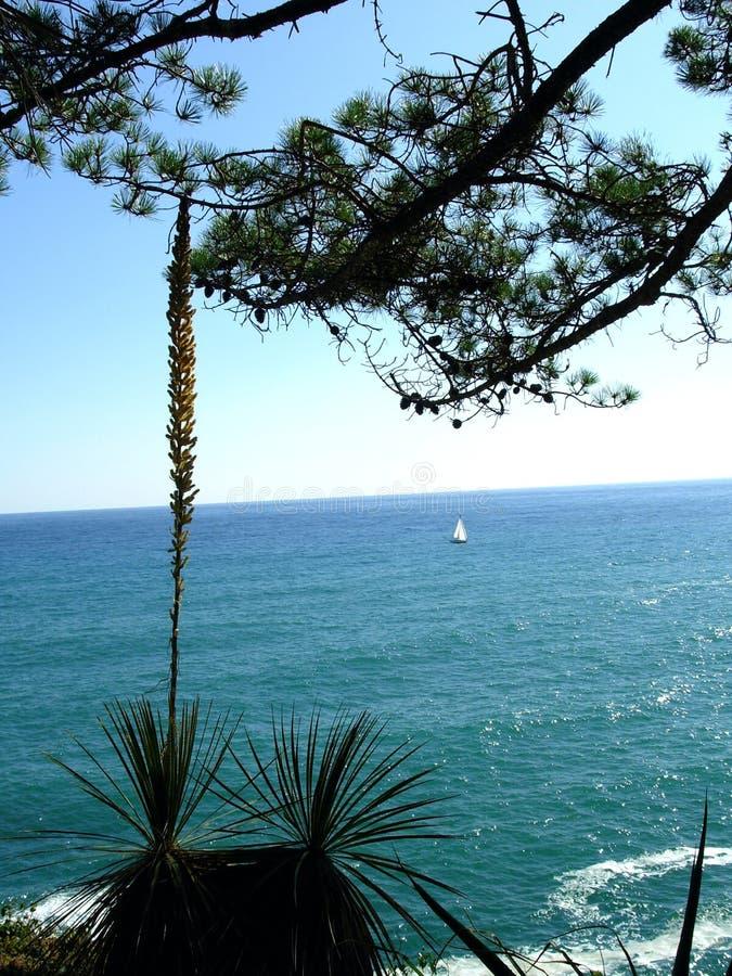 Las plantas y el mar meridionales. foto de archivo libre de regalías