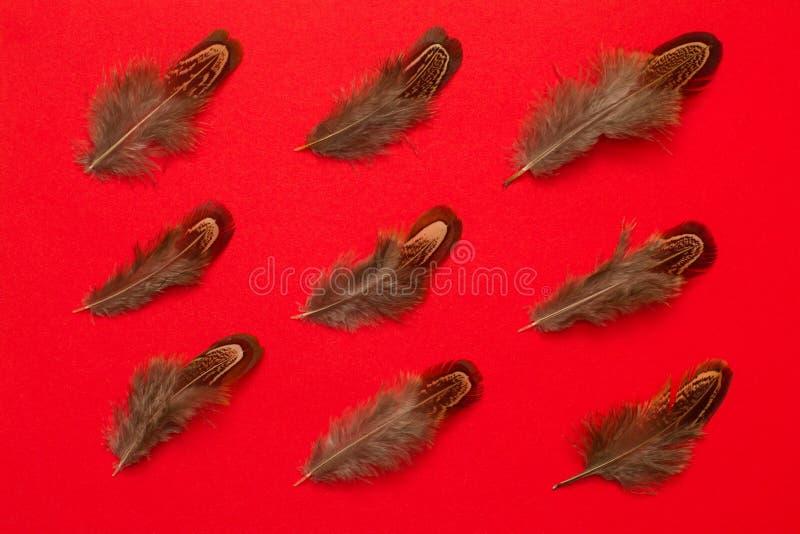 Las plumas del faisán agrupan endecha del plano en fondo rojo fotografía de archivo libre de regalías