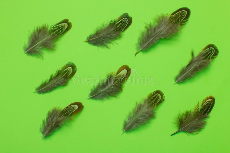 Las plumas del faisán agrupan endecha del plano en fondo verde imagen de archivo