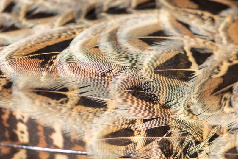 Las plumas del faisán resumen como fondo fotografía de archivo