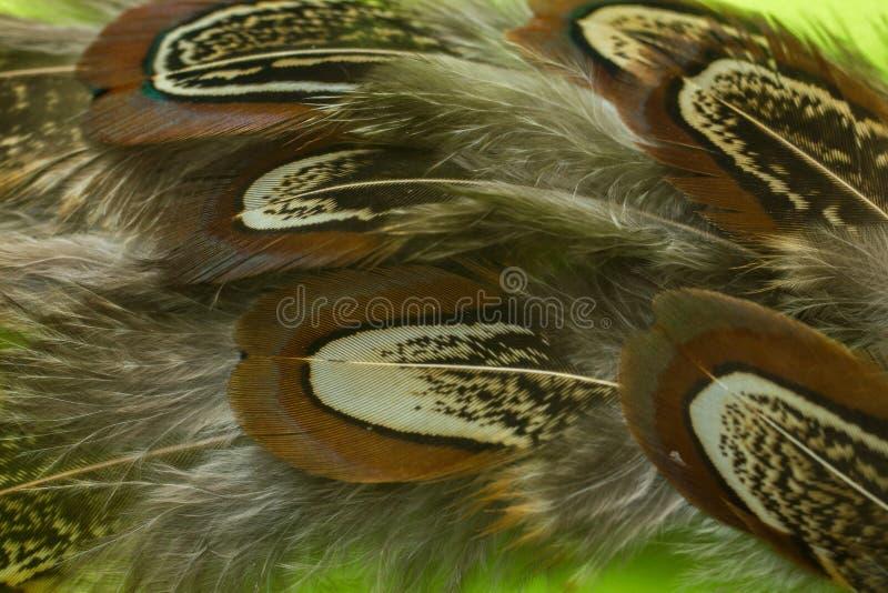 Las plumas del faisán texturizan el primer del fondo foto de archivo libre de regalías