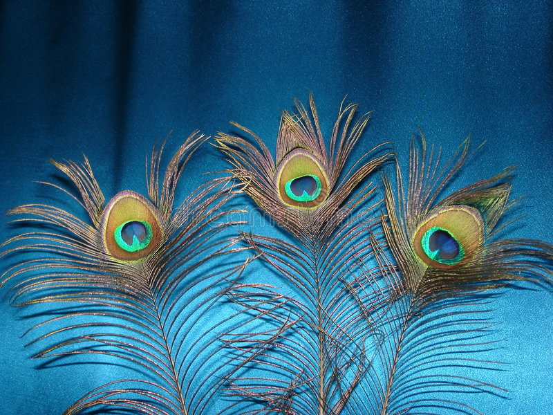 Download Las plumas del pavo real imagen de archivo. Imagen de cortina - 1287711