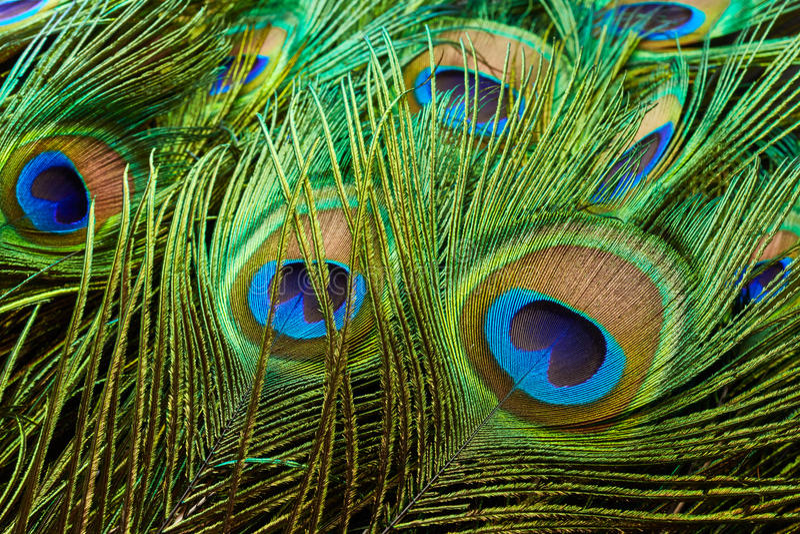Las plumas del pavo real fotografía de archivo libre de regalías