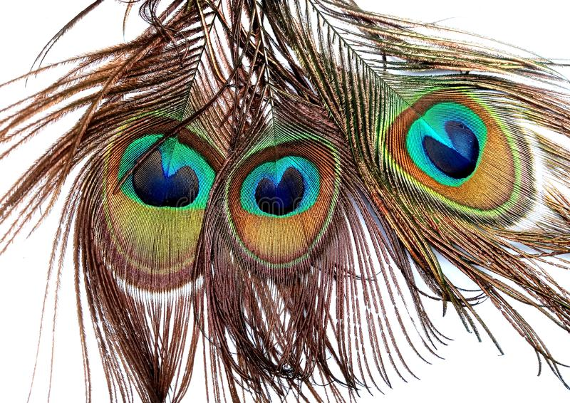 Las plumas del pavo real se cierran para arriba aislado en un fondo blanco fotografía de archivo libre de regalías
