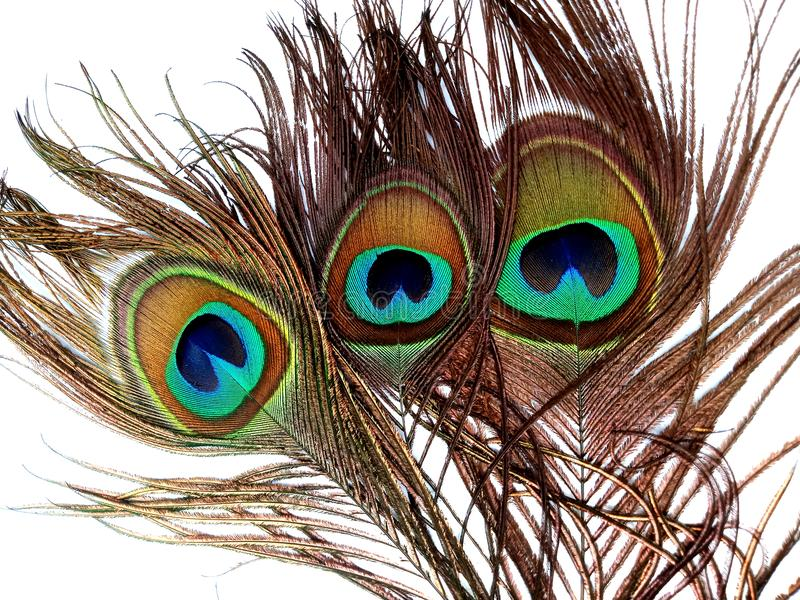 Las plumas del pavo real se cierran para arriba aislado en un fondo blanco fotografía de archivo
