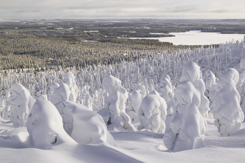 Las pod śniegiem Krajobraz obraz royalty free