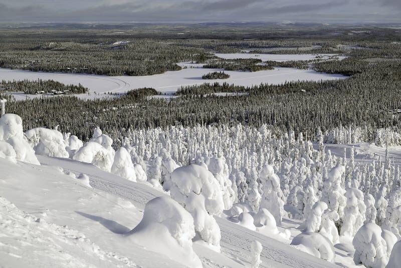 Las pod śniegiem Nizina krajobrazowy widok zdjęcie royalty free